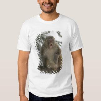 Rhesus Macaque monkey (Macaca mulatta) sitting T Shirts