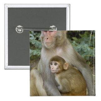 Rhesus Macaques Macaca mulatta) mother & baby 15 Cm Square Badge