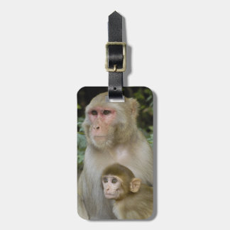 Rhesus Macaques Macaca mulatta) mother & baby Bag Tag