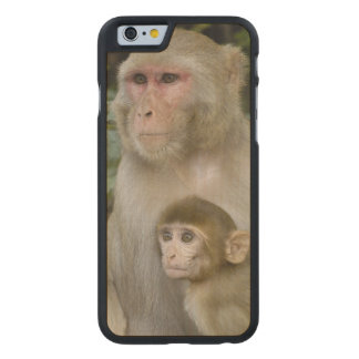 Rhesus Macaques Macaca mulatta) mother & baby Carved® Maple iPhone 6 Slim Case