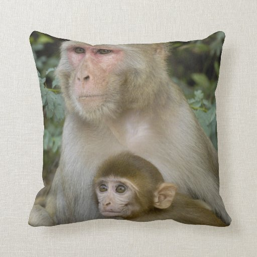Rhesus Macaques Macaca mulatta) mother & baby Pillow