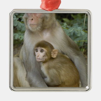 Rhesus Macaques Macaca mulatta) mother & baby Christmas Tree Ornaments