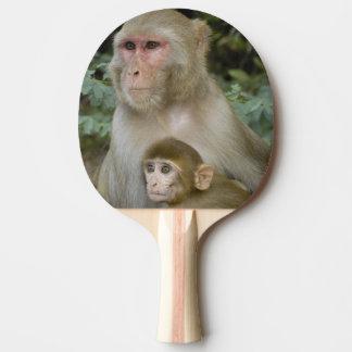 Rhesus Macaques Macaca mulatta) mother & baby Ping-Pong Paddle