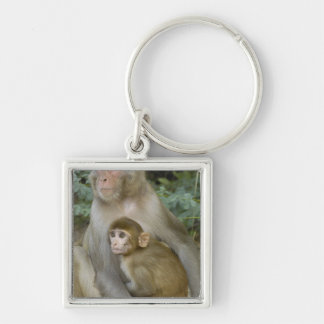 Rhesus Macaques Macaca mulatta) mother & baby Keychains