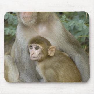 Rhesus Macaques Macaca mulatta) mother & baby Mousepad