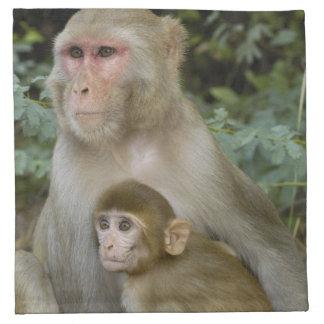 Rhesus Macaques Macaca mulatta) mother & baby Napkin