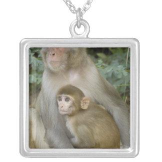 Rhesus Macaques Macaca mulatta) mother & baby Square Pendant Necklace
