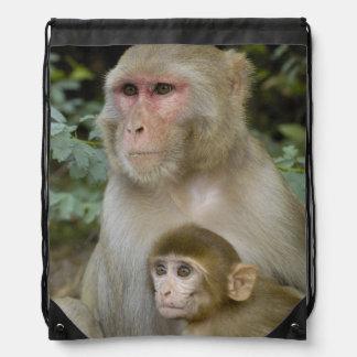Rhesus Macaques Macaca mulatta) mother & baby Backpack