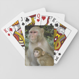 Rhesus Macaques Macaca mulatta) mother & baby Playing Cards