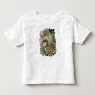 Rhesus Macaques Macaca mulatta) mother & baby Toddler T-Shirt