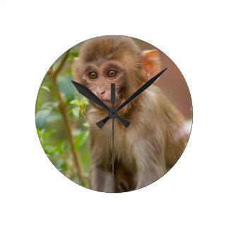 Rhesus Monkey Baby, Monkey Temple, Jaipur Clock