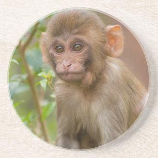 Rhesus Monkey Baby, Monkey Temple, Jaipur Beverage Coaster