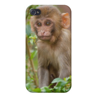 Rhesus Monkey Baby, Monkey Temple, Jaipur Cover For iPhone 4