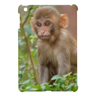 Rhesus Monkey Baby, Monkey Temple, Jaipur Cover For The iPad Mini