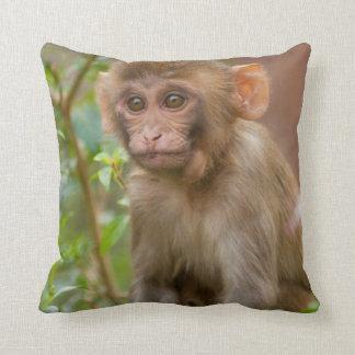 Rhesus Monkey Baby, Monkey Temple, Jaipur Cushion