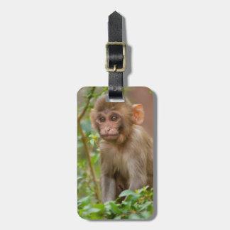 Rhesus Monkey Baby, Monkey Temple, Jaipur Luggage Tag