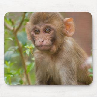 Rhesus Monkey Baby, Monkey Temple, Jaipur Mouse Mat