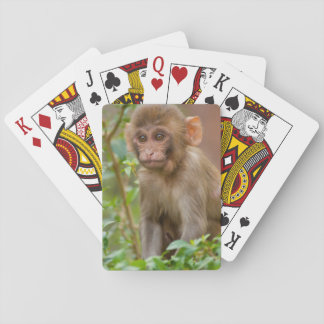 Rhesus Monkey Baby, Monkey Temple, Jaipur Playing Cards