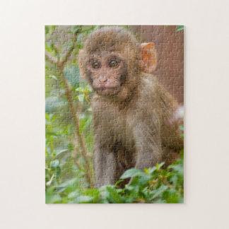 Rhesus Monkey Baby, Monkey Temple, Jaipur Puzzles