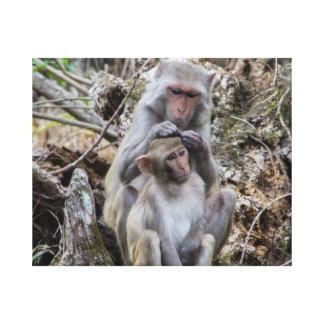 Rhesus Monkeys Canvas Print