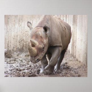Rhino 1 Poster