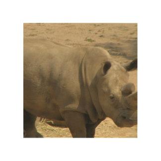 rhino-23.jpg wood canvas