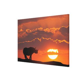 Rhino at sunset, Masai Mara, Kenya Canvas Print