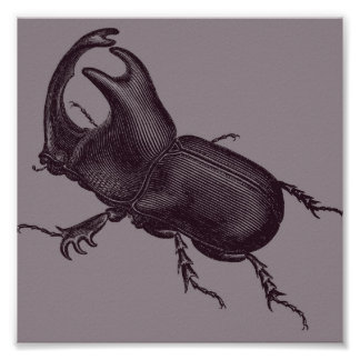 Rhino Beetle, Scarabeus Chorinaeus Poster