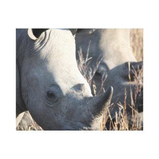 Rhino Canvas Canvas Print