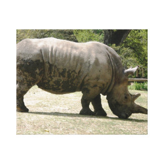 Rhino Canvas Prints