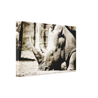 Rhino Gallery Wrap Canvas