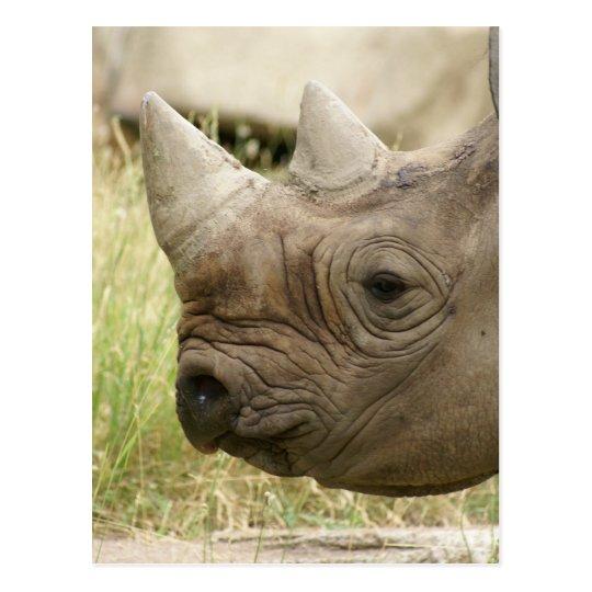 rhino close up postcard