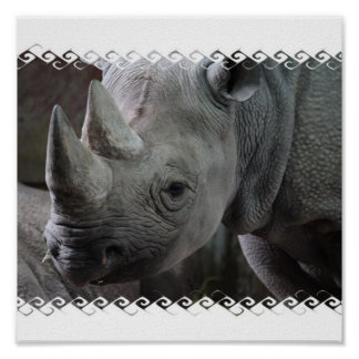 Rhino Facts Poster