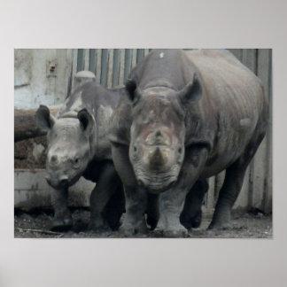Rhino Family Poster