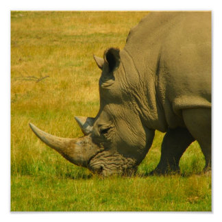 Rhino Photo Print