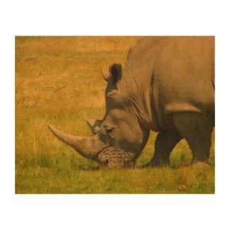 Rhino Photo Photo Cork Paper