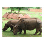 Rhino Post Cards