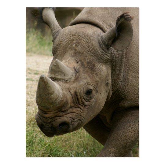 rhino walking postcard