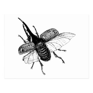 Rhinoceros Beetle Vintage Wood Engraving Postcard