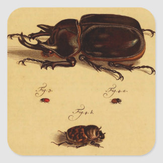Rhinoceros Beetles Square Sticker