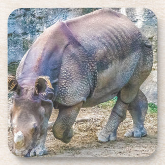Rhinoceros Coaster