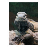 Rhinoceros Iguana Looking at You Poster