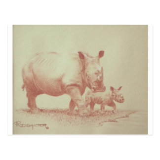 Rhino's Postcard