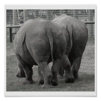 Rhinos Poster