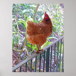 Rhode Island Red Hen Poster