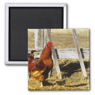 Rhode Island Red Rooster Magnet