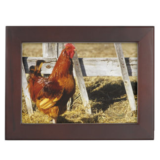 Rhode Island Red Rooster Memory Box