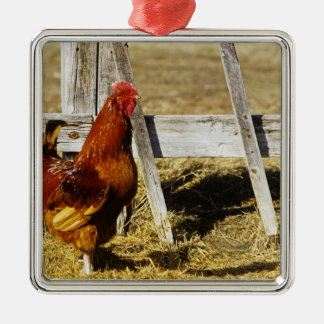 Rhode Island Red Rooster Silver-Colored Square Decoration
