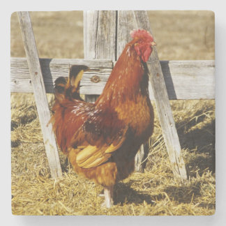 Rhode Island Red Rooster Stone Coaster