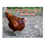 Rhode Island State Bird: Rhode Island Red